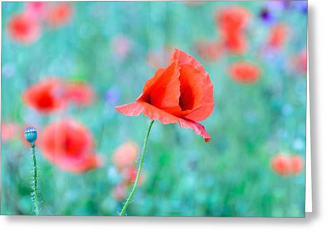 Greeting Card featuring the photograph Poppies In A Field by Marion McCristall