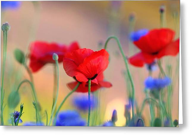 Poppies In Spring  Greeting Card