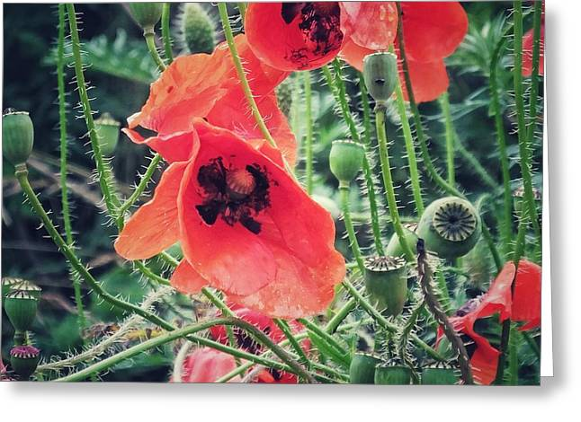 Poppies Greeting Card by Karen Stahlros