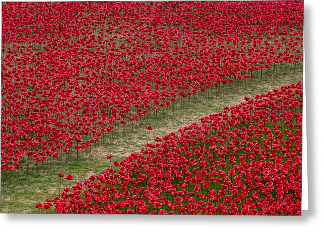 Poppies Of Remembrance Greeting Card by Martin Newman