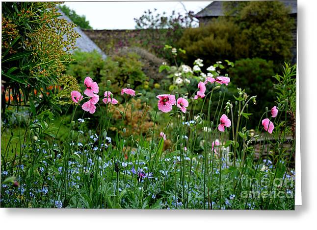 Poppies Of The Great Dixter Greeting Card