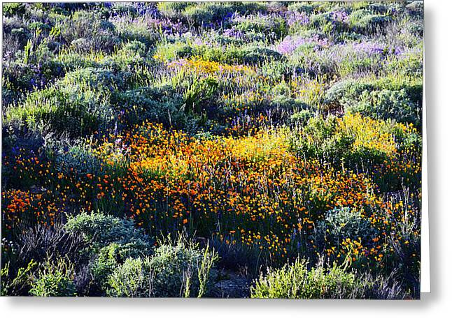 Greeting Card featuring the photograph Poppies On A Hillside by Glenn McCarthy Art and Photography