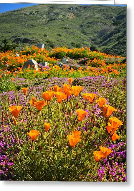 Poppies On Pacific Coast Highway Greeting Card