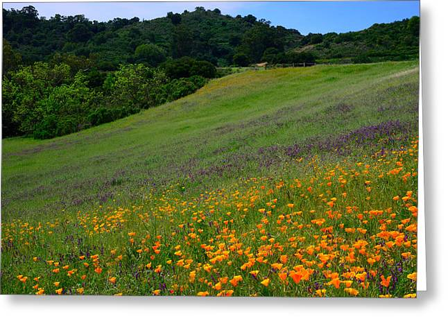 Poppies On The Hillside Greeting Card by Kathy Yates