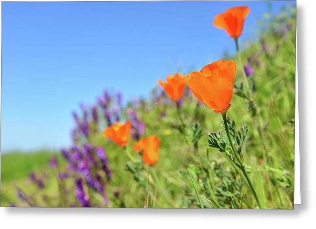 Poppies On The Ridge Greeting Card by Kathy Yates