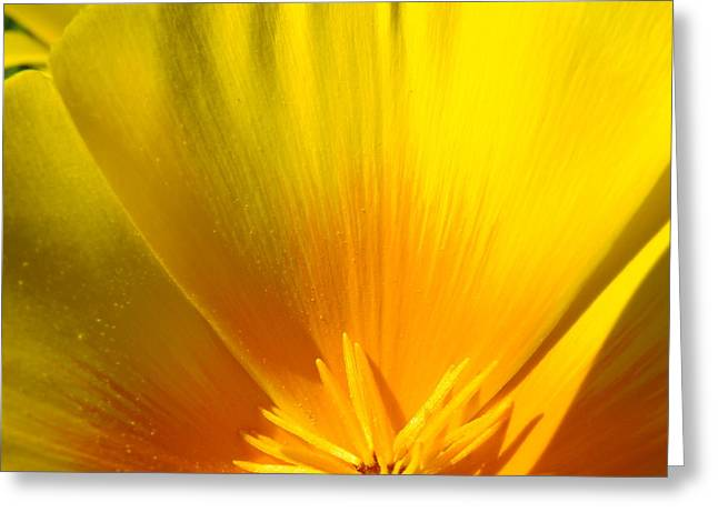 Poppies Orange Poppy Flower Close Up 2 Sunlit Poppy Baslee Troutman Greeting Card