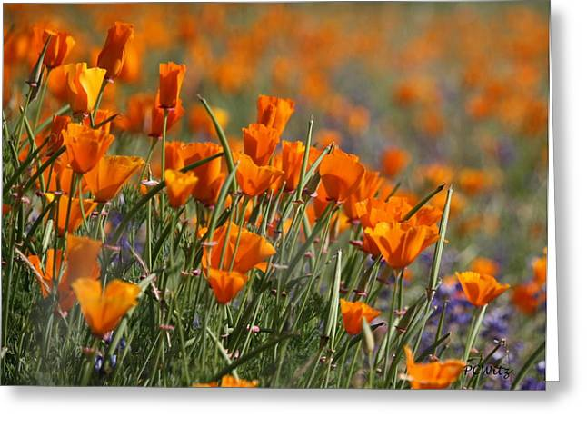 Greeting Card featuring the photograph Poppies by Patrick Witz