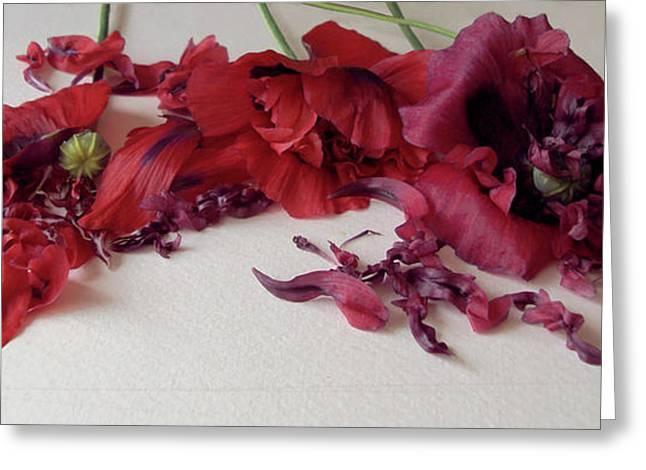Poppies Petals Greeting Card
