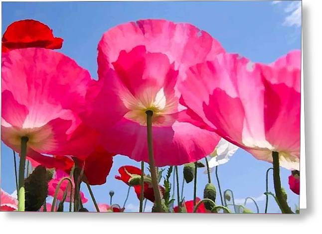 Poppies Romance Greeting Card
