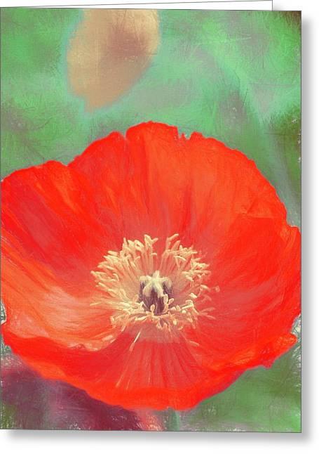 Poppy 22 Greeting Card by Pamela Cooper