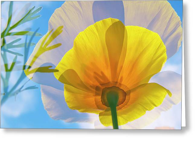 Poppy And Sun Greeting Card