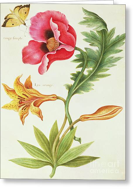 Poppy And An Orange Lily Greeting Card