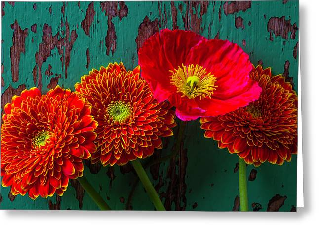 Poppy And Mums Greeting Card by Garry Gay