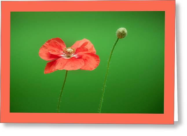 Poppy Greeting Card by Bulik Elena
