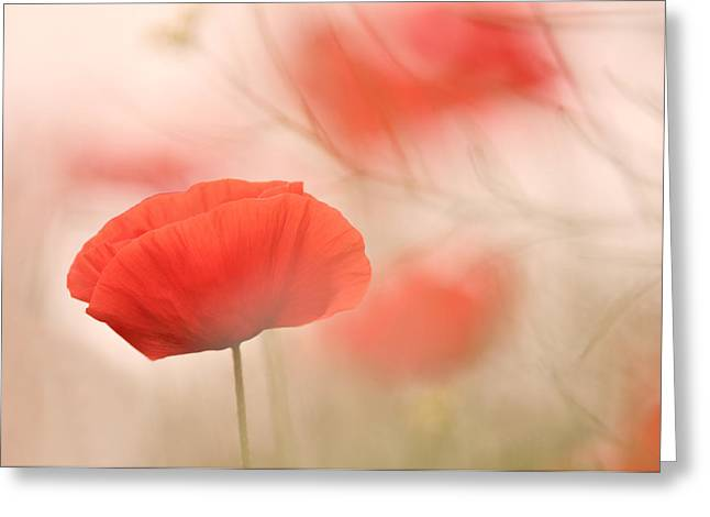 Poppy Dreamtime Greeting Card by Loulou Beavers
