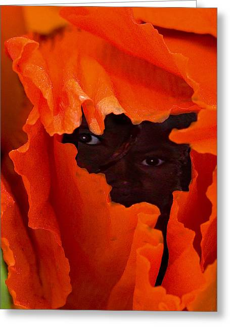 Poppy Faces By Jean Noren Greeting Card by Jean Noren