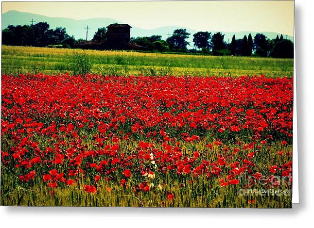 Poppy Field In Tuscany Greeting Card by Lainie Wrightson