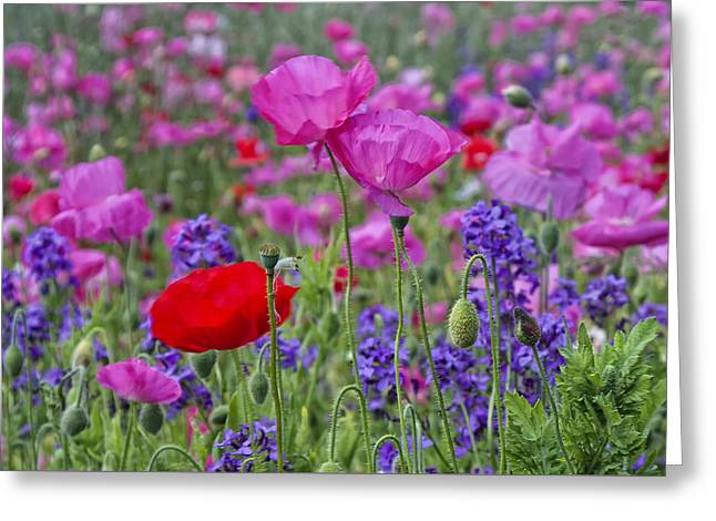 Greeting Card featuring the photograph Poppy Field by Ken Barrett
