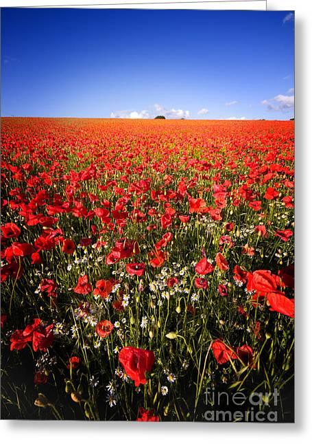 Poppy Field Greeting Card by Meirion Matthias
