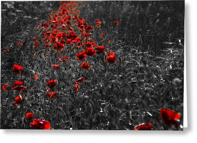 Poppy Field Greeting Card by Svetlana Sewell
