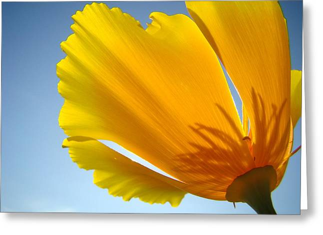 Poppy Flower Art Print Poppies 13 Botanical Floral Art Blue Sky Greeting Card