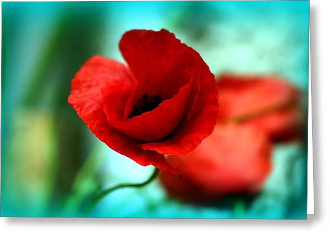 Poppy Flower Greeting Card by Emanuel Tanjala
