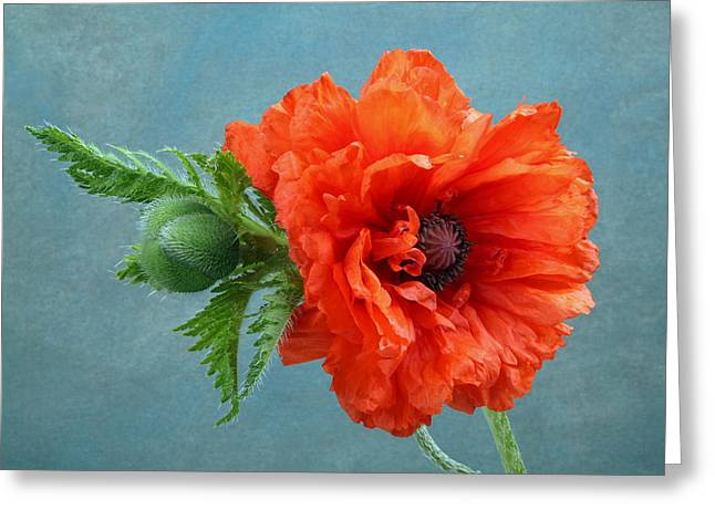 Poppy Flower Greeting Card