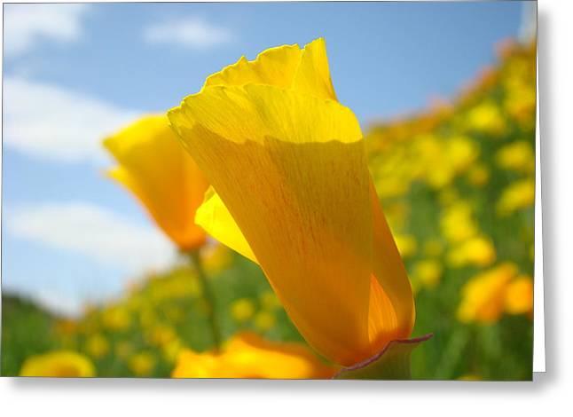 Poppy Flowers Meadow 3 Sunny Day Art Blue Sky Landscape Greeting Card by Baslee Troutman