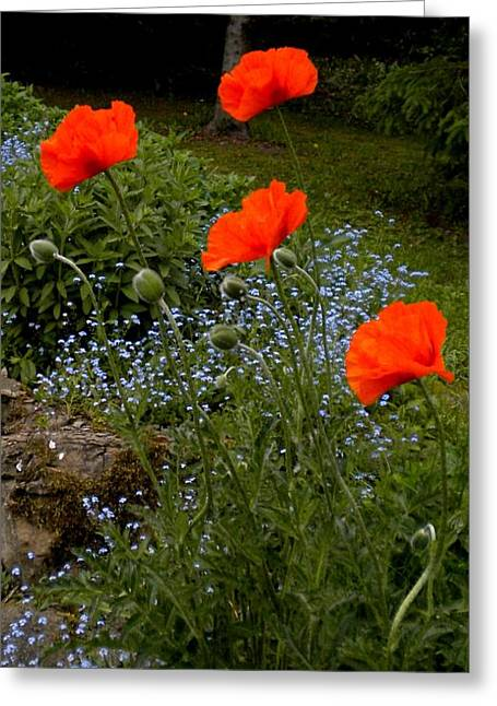 Poppy Foursome Greeting Card