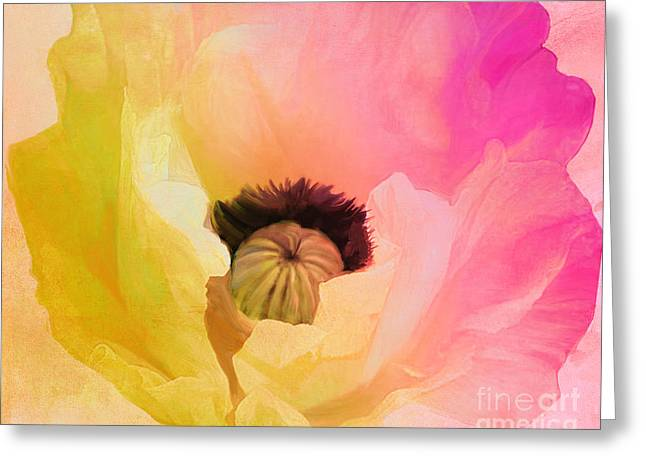 Poppy Gradient Pink Greeting Card by Mindy Sommers