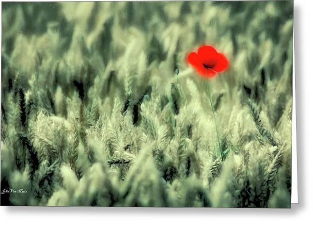 Poppy In Cornfield Greeting Card