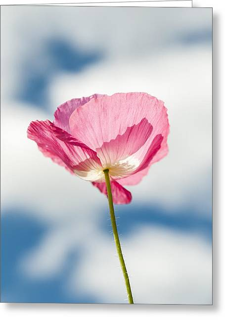 Poppy In The Clouds Greeting Card