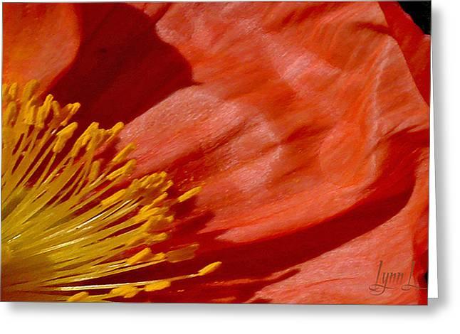 Poppy Love Greeting Card by S Lynn Lehman