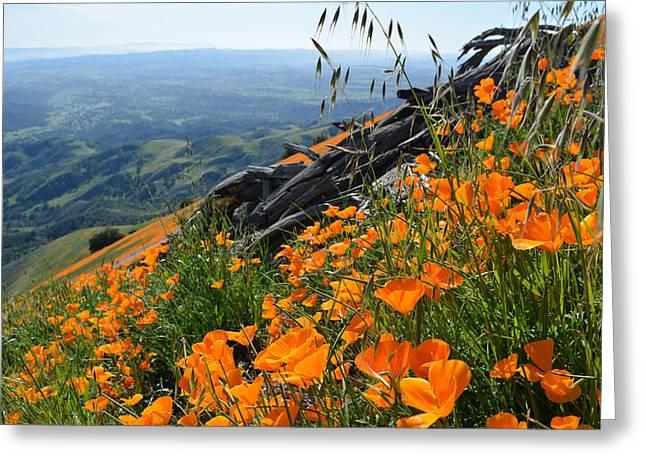 Poppy Mountain  Greeting Card