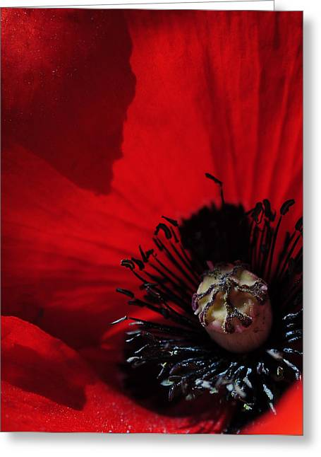 Poppy No. 2 Greeting Card by The Forests Edge Photography - Diane Sandoval
