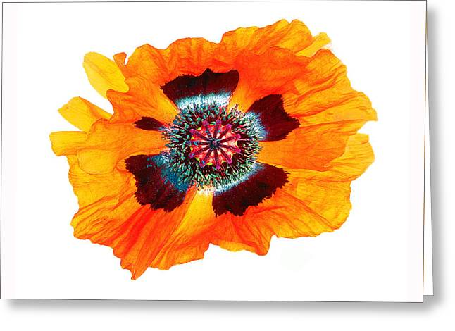 Poppy Pleasing Greeting Card