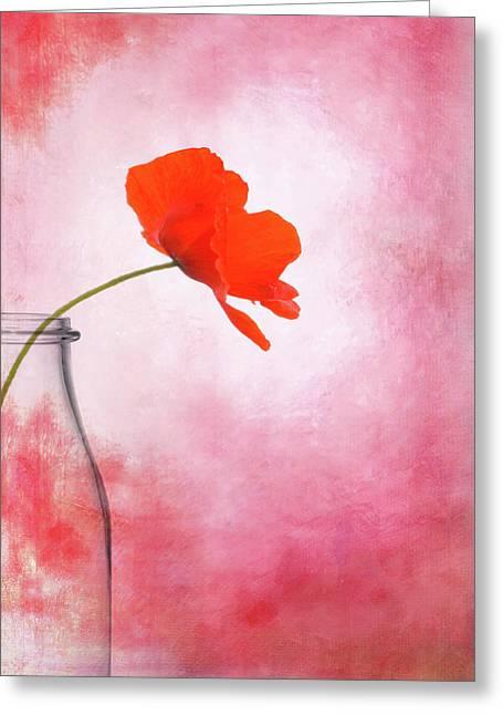 Poppy Red Greeting Card by Mark Rogan