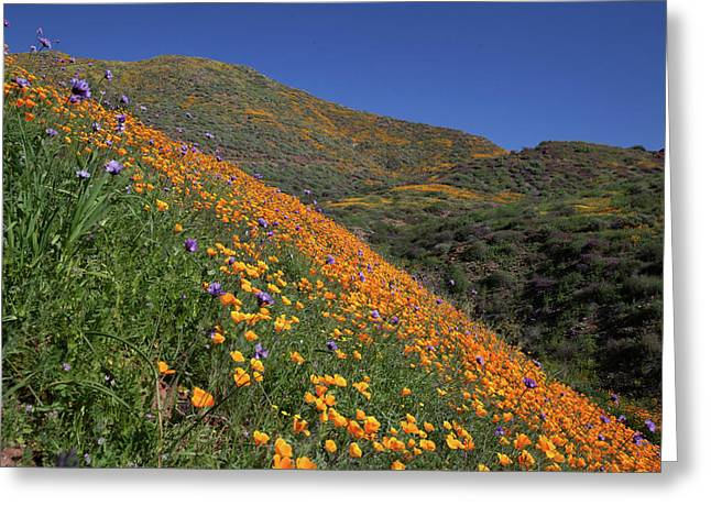 Greeting Card featuring the photograph Poppy Superbloom On Hillside by Cliff Wassmann