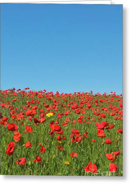 Poppy Triptych Panel 2 Greeting Card by Terri Waters