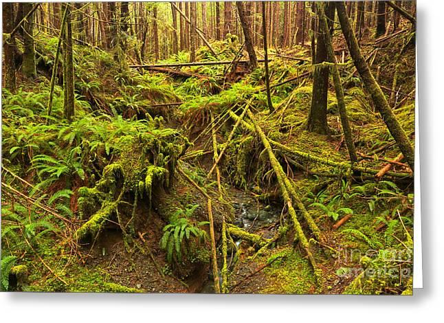 Port Alice Rainforest Greeting Card