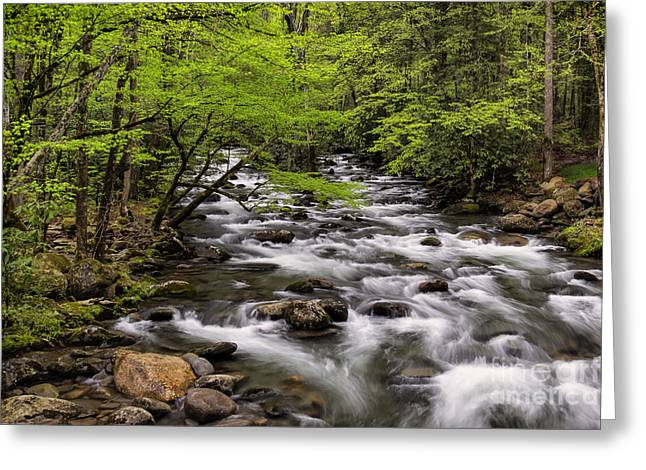 Porters Creek Greeting Card by Madonna Martin