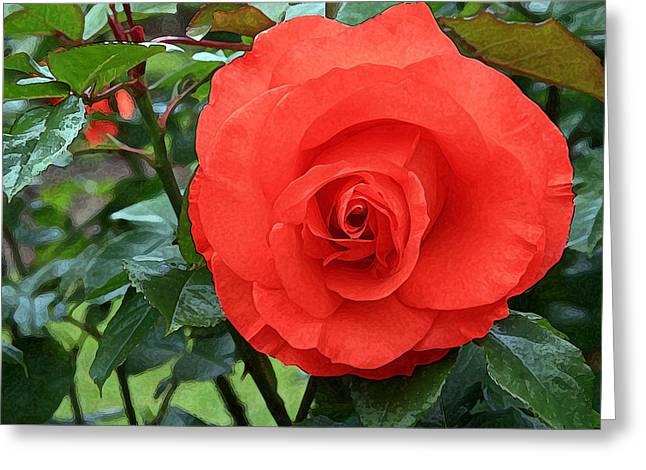 Portland Rose Garden Greeting Card by Margaret Hood