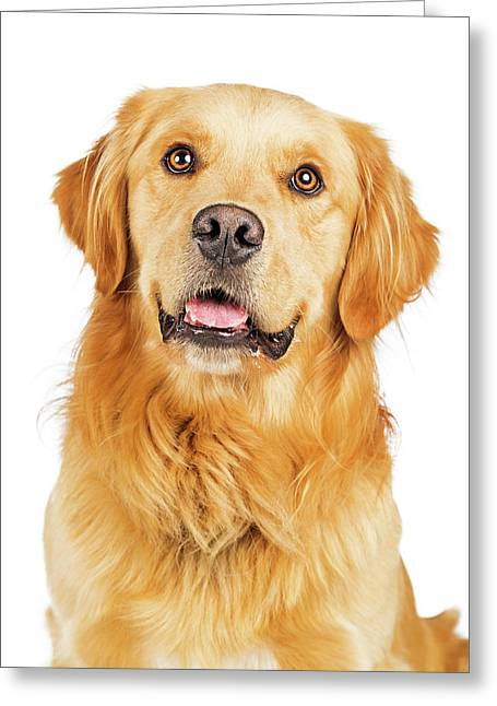Portrait Happy Purebred Golden Retriever Dog Greeting Card by Susan Schmitz
