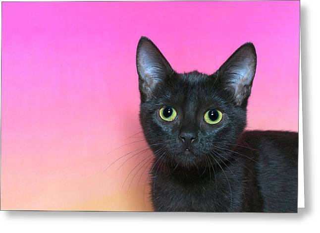 Portrait Of A Black Kitten Greeting Card