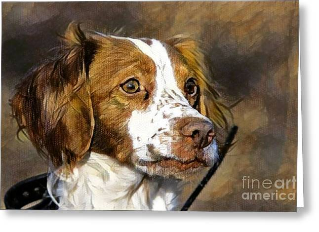 Portrait Of A Brittany - D009983-a Greeting Card by Daniel Dempster