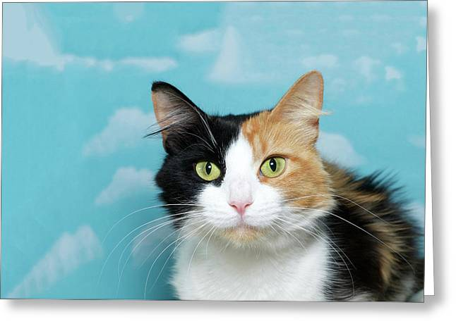 Portrait Of A Calico Cat Greeting Card
