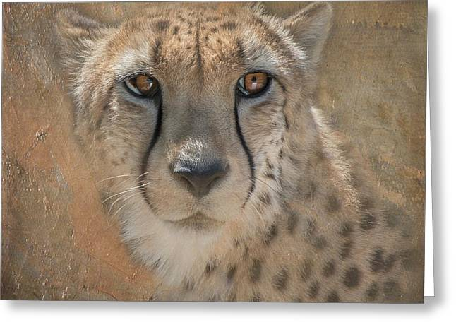 Portrait Of A Cheetah Greeting Card