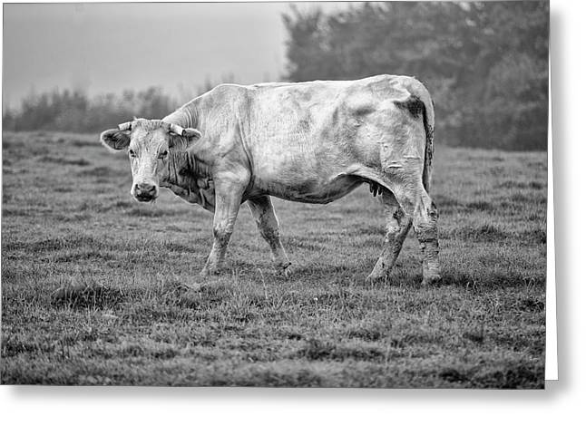 Portrait Of A Cow Greeting Card by Nailia Schwarz