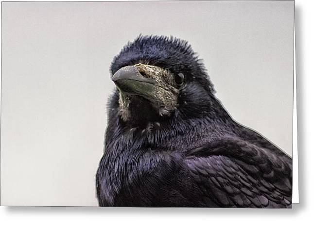 Portrait Of A Crow Greeting Card by Martin Newman