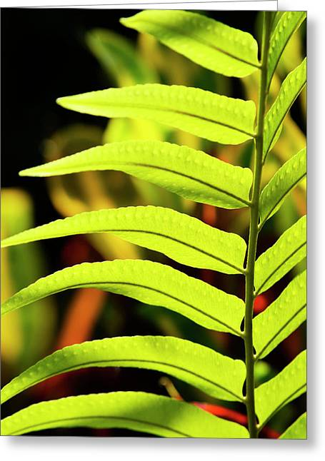 Portrait Of A Fern Greeting Card